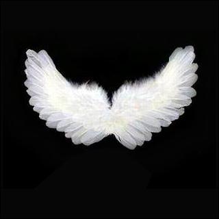 Le ali degli angeli sono simboliche_…E se fossero reali_ Le ali ___