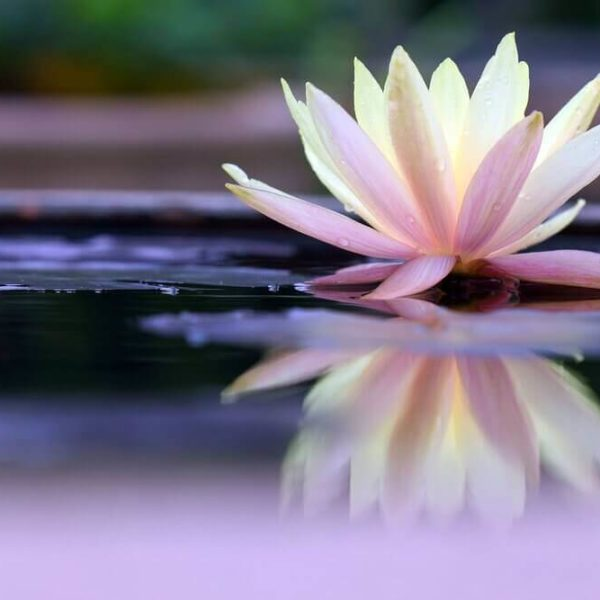 fiore-di-loto-600x600.jpg